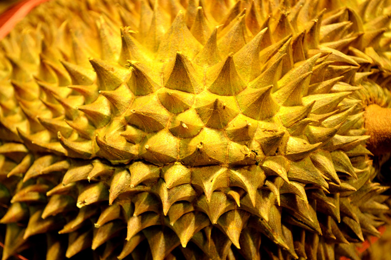 Durian fruit important health facts