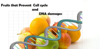 fruits prevent dna damages