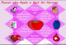 Apple is Best for Nervous System