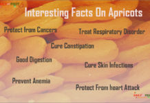 Interesting Facts On Apricots