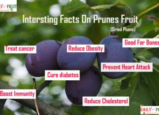 interesting facts on purnes