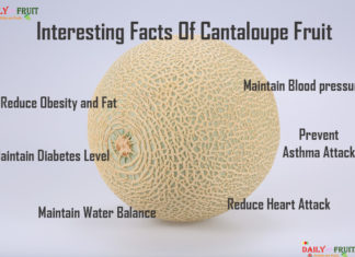 Interesting Facts On Cantaloupe