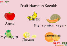 Fruit Name in Kazakh